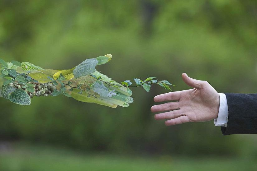 Green-Handshake.jpg
