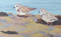 Pipping Plovers