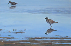 The Plover and the Dowtcher