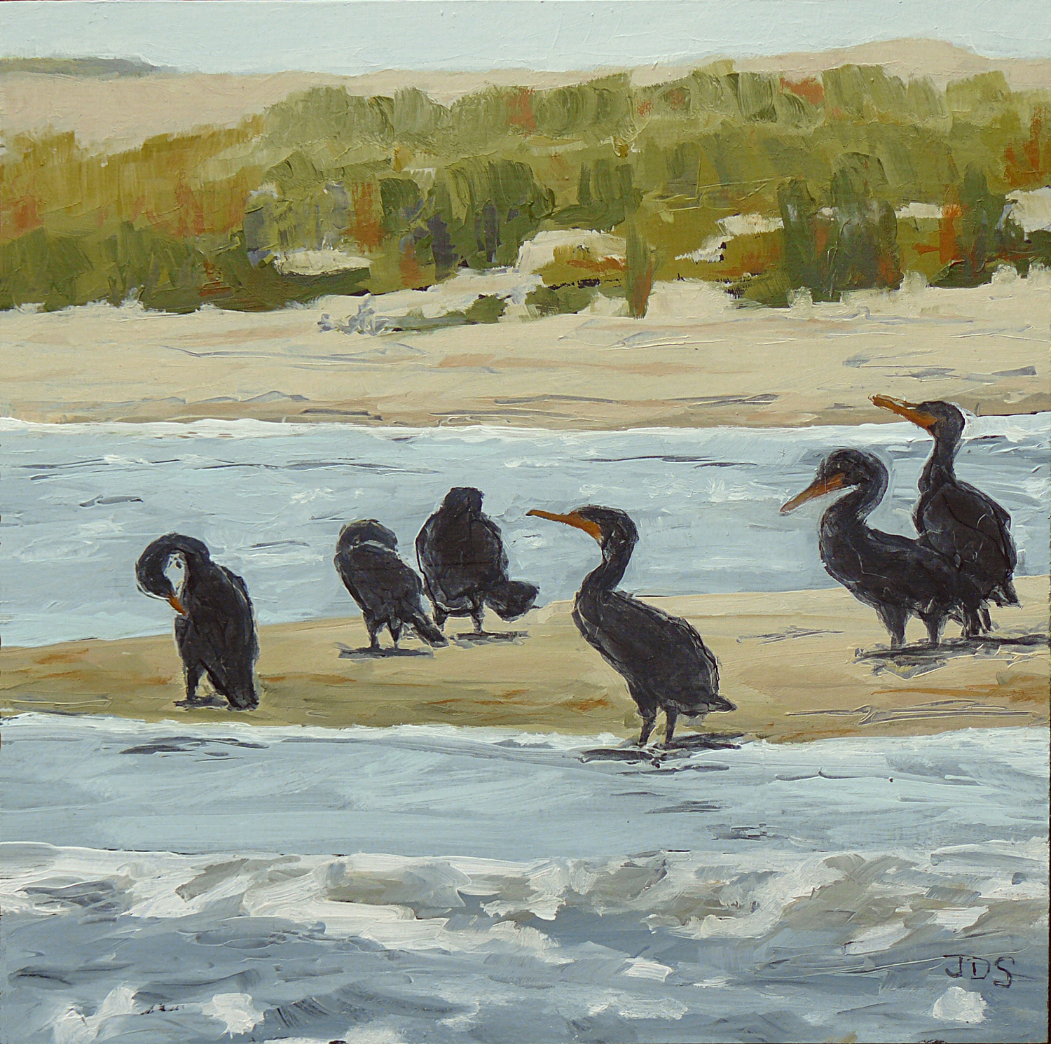Cormorants #5