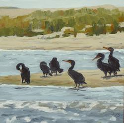 Cormorants #5