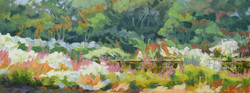 Parsonage Pond; Swamp Rose Mallows #2
