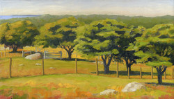 Erratics and Oaks; Back Pasture