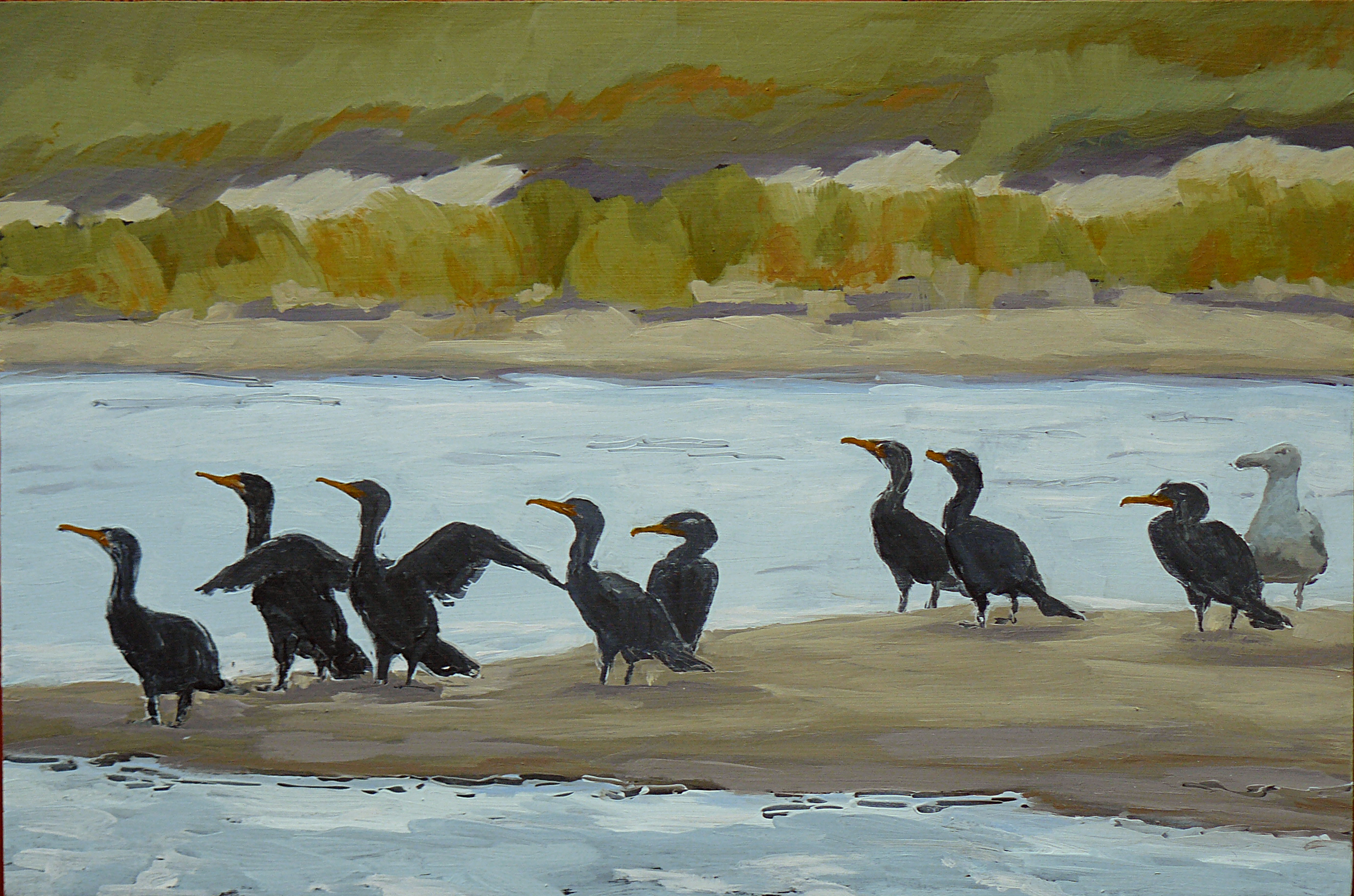 Cormorants and a Friend
