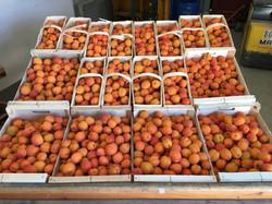 Présentoir abricots