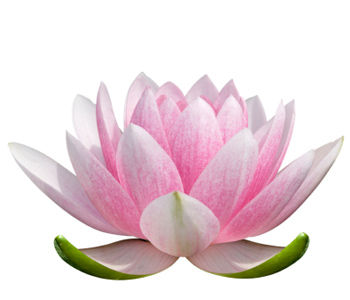 lotus-flower-meaning-3.jpg