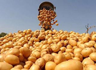 Ціна на картоплю більше не зростатиме