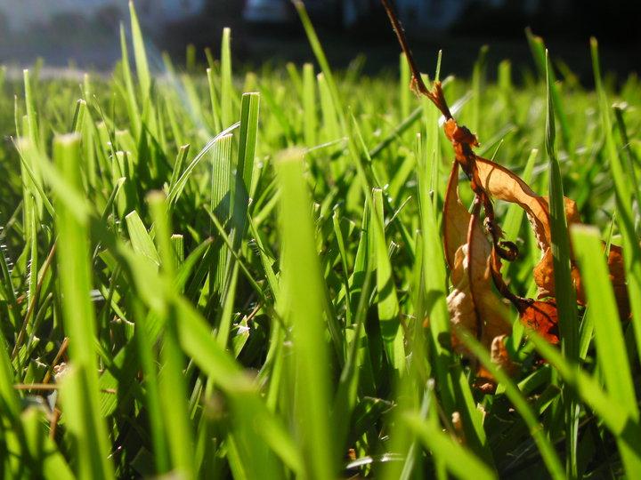 On the Ground I