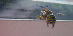 A Dying Bee