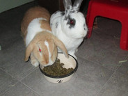 patch and daisy dinner time.jpg