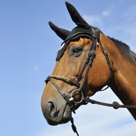IHWT BRIDLE EVOLUTION | COVERED ROPE