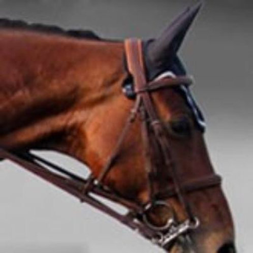 Silver Crown double bridle with leather reins