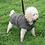 Thumbnail: Dartmoor Coat