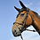 Thumbnail: IHWT BRIDLE EVOLUTION | COVERED ROPE