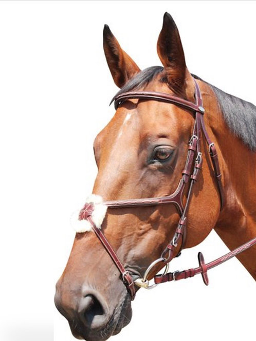 KNOXVILLE grackle bridle