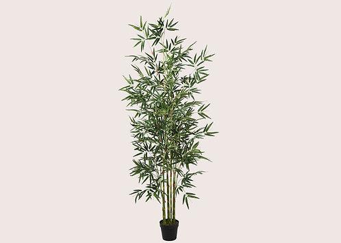 עץ במבוק - L