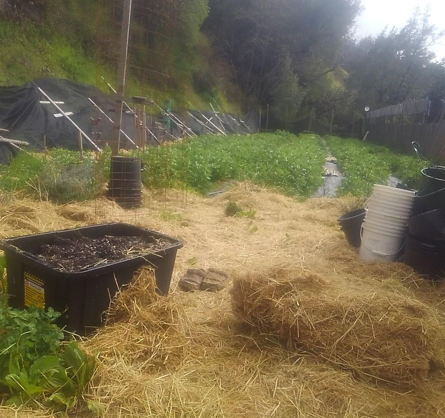 A look at this Garberville cannabis farm