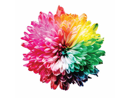 Color Branding: How to Effectively Choose Your Brand Colors