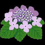 flower_gaku_ajisai.png