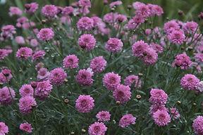 wild flowers in a meadow