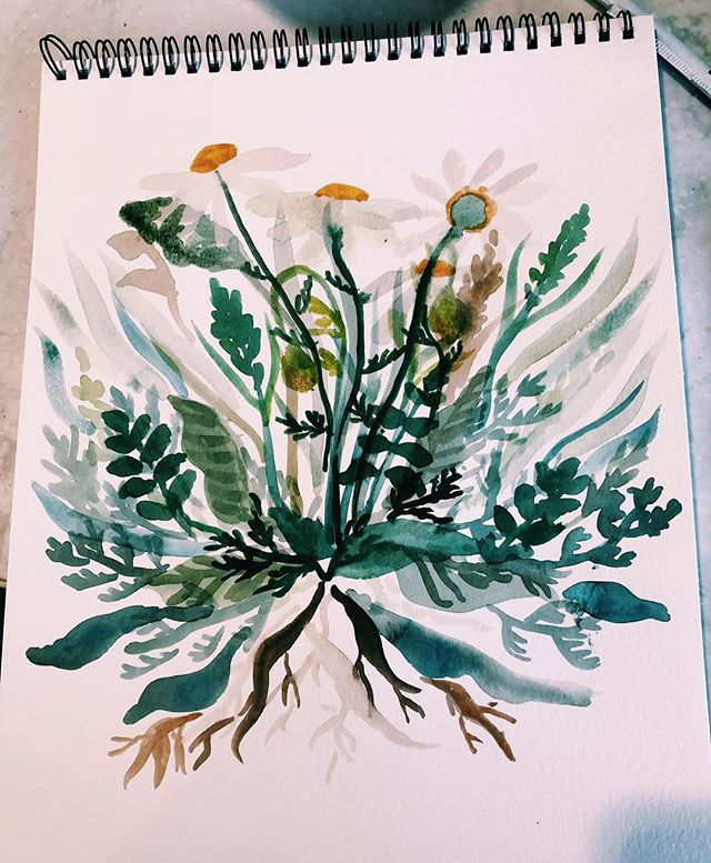 Watercolor daisies. ._._.jpg