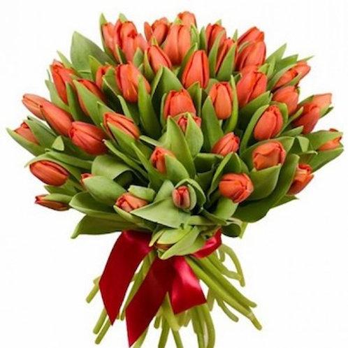 Тюльпаны коралловые (от 50 шт.)