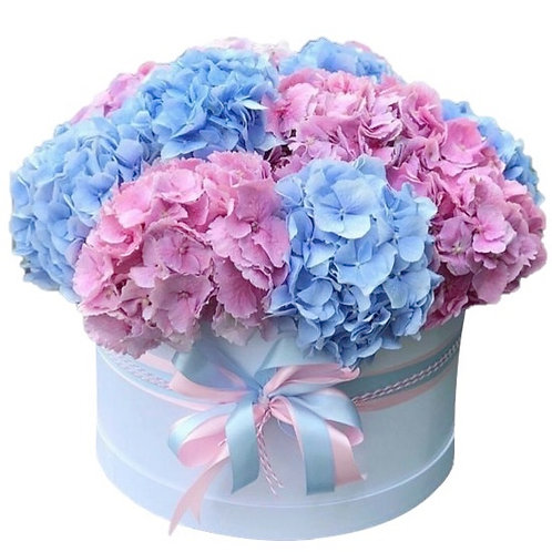 11 розовых и голубых гортензии в шляпной коробке