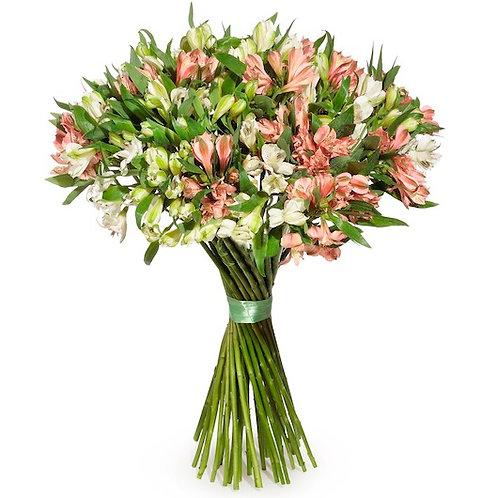 Букет из 29 бело-розовых альстромерий