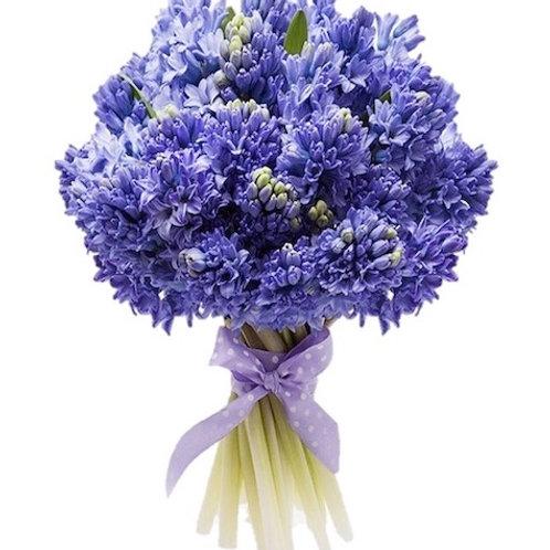 Синие гиацинты поштучно (от 25 шт.)