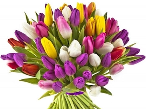 Тюльпаны Микс (от 200 шт.)