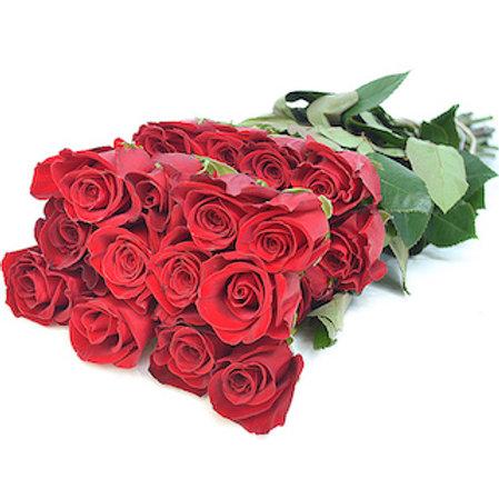 Розы Фридом Эквадор (от 25 шт.)