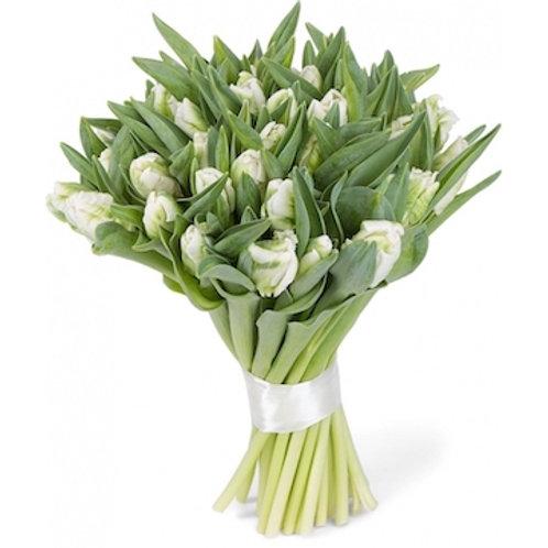 Пионовидные белые Тюльпаны (от 50 шт.)