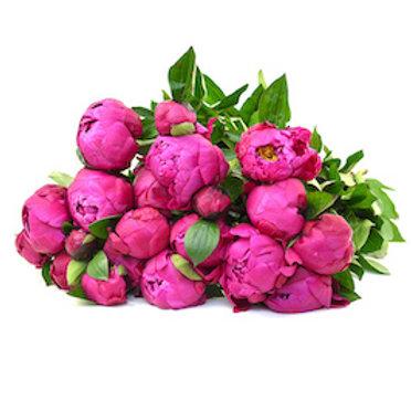 Пионы ярко-розовые