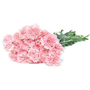 Гвоздика нежно-розовая