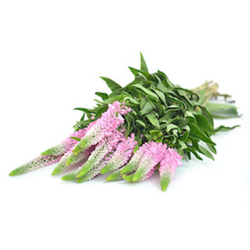 Вероника розовая (от 50 шт.)