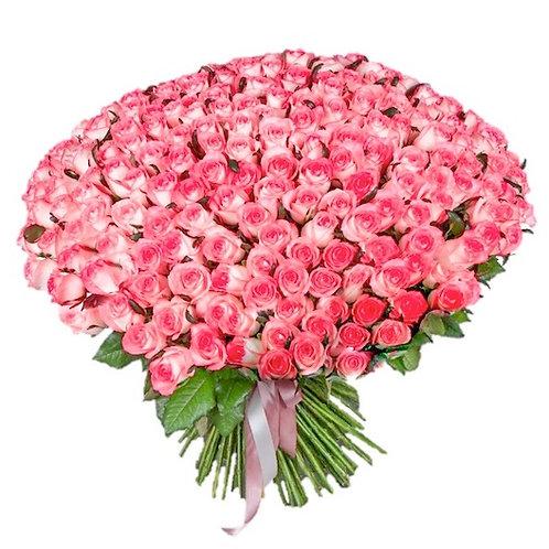 """301 роза """"Джумилия"""""""