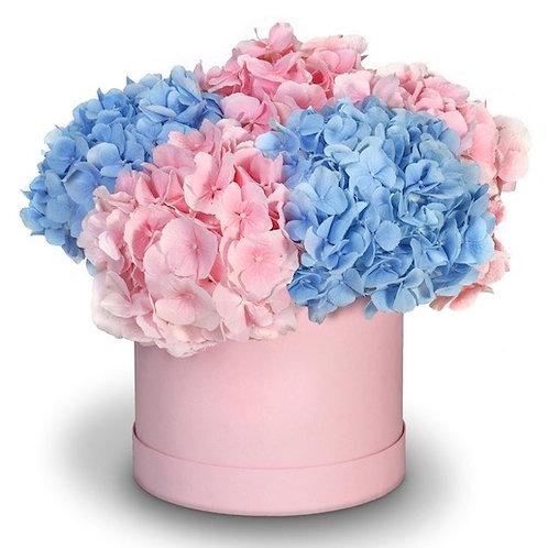 5 розовых и голубых гортензии в шляпной коробке