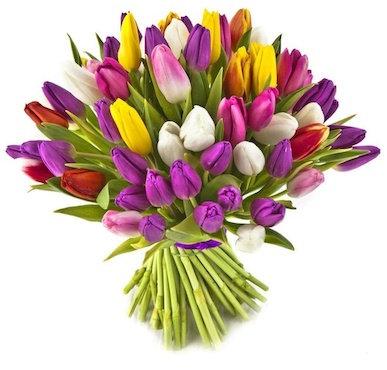 Тюльпаны Микс Голландия к 8 марта пачками от 50 шт.