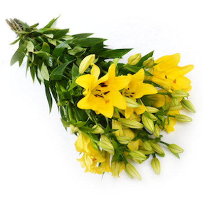 Лилия желтая Азия (от 10 шт.)