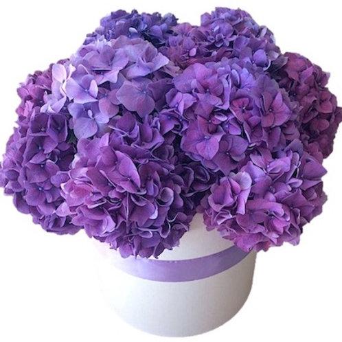 11 фиолетовых гортензий в шляпной коробке