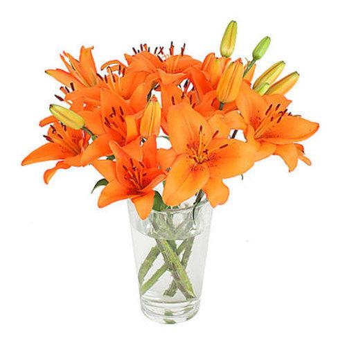 9 оранжевых азиатских лилий