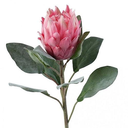 Протея розовая