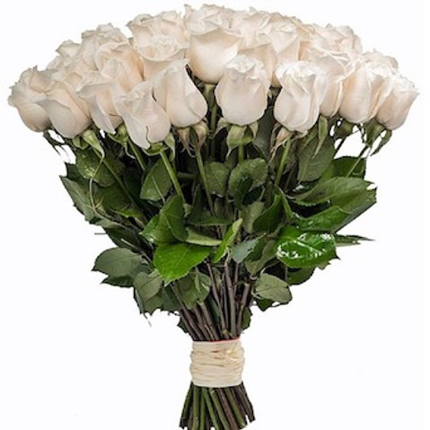 Розы Вендела Эквадор (от 25 шт.)
