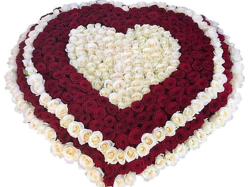 Сердце из 501 красной и белой розы