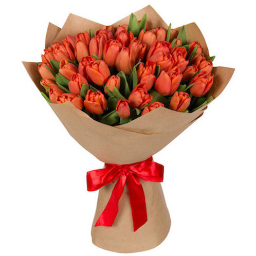 Коралловые тюльпаны Голландия поштучно (от 50 шт.)