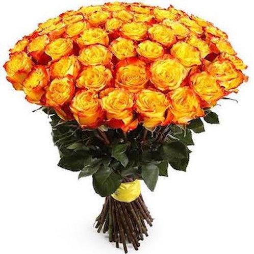 Розы Хай Мэджик Эквадор (от 25 шт.)