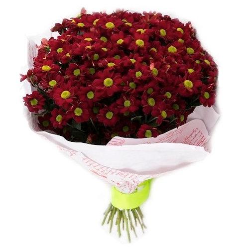 Бордовые кустовые хризантемы Бакарди поштучно (от 1 шт.)