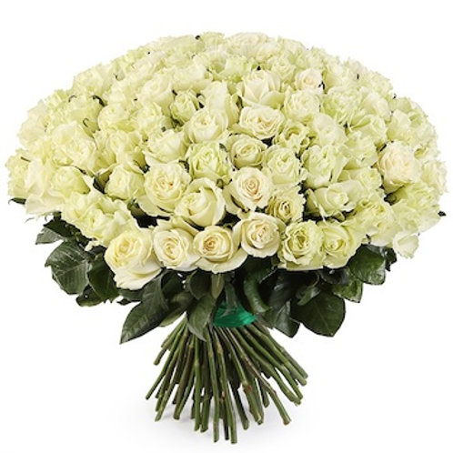 101 белая роза премиум Эквадор Мондиаль