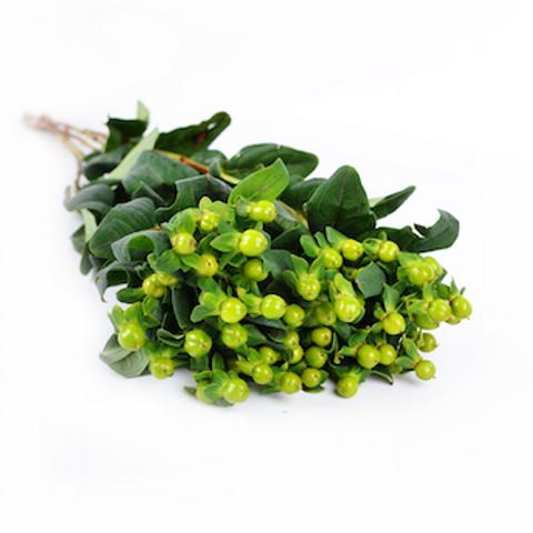 Гиперикум зеленый (от 10 шт.)