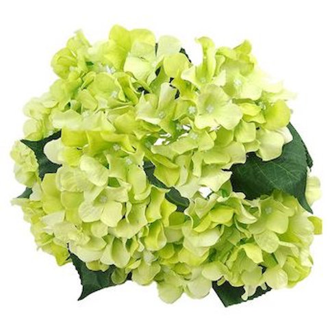 Гортензии зеленые (от 1 шт.)
